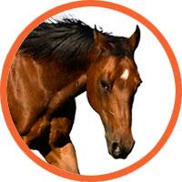 caballo_boton